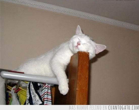 gato durmiendoCG_15735_si_podria_ir_a_dormir_a_mi_cama_pero_es_que_me_ha_dado_sueno_aqui